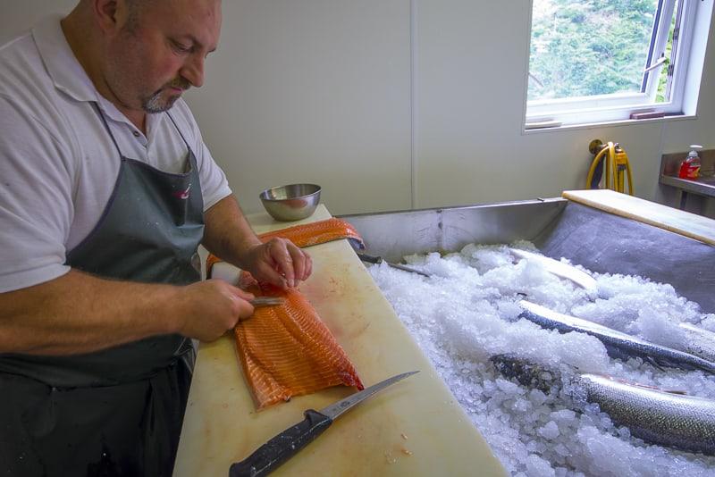 boing the salmon